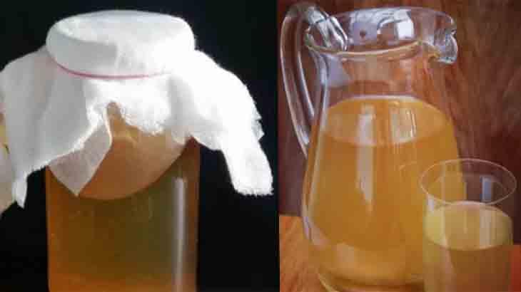 Чайный гриб полезные свойства, как правильно заваривать