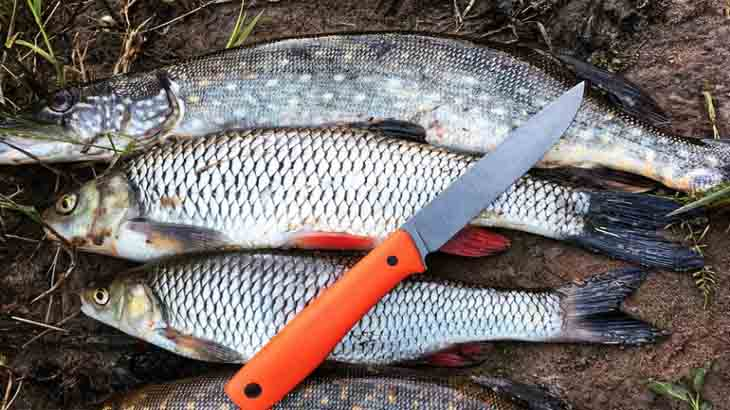 Как чистить рыбу и избавить ее от неприятного запаха
